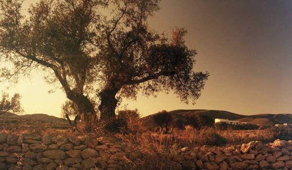 Image Cortijos valley
