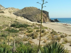 Playa del Barronal, San José
